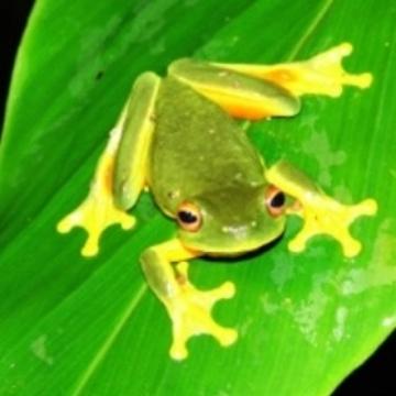 Visit Cairns Rainforest Wildlife Tour
