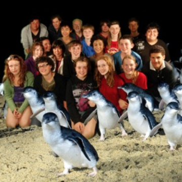 Phillip Island Free Penguins