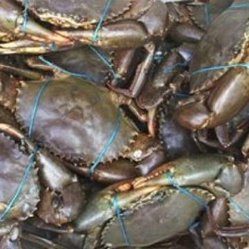 Visit Cairns Half Day Fishing Amp Crabbing