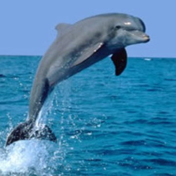 Visit Cairns Port Stephens Amp Dolphin Watching