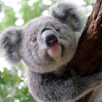 Visit Cairns Brisbane City Sights Amp Koala Sanctuary