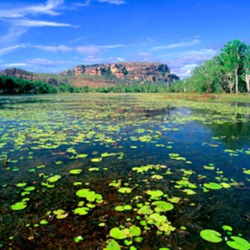 Visit Cairns Kakadu National Park Day Tour